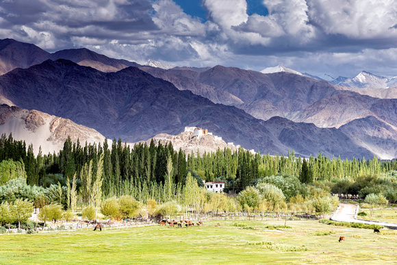 View of Thiksey gompa through the Indus valley landscape India Ladakh
