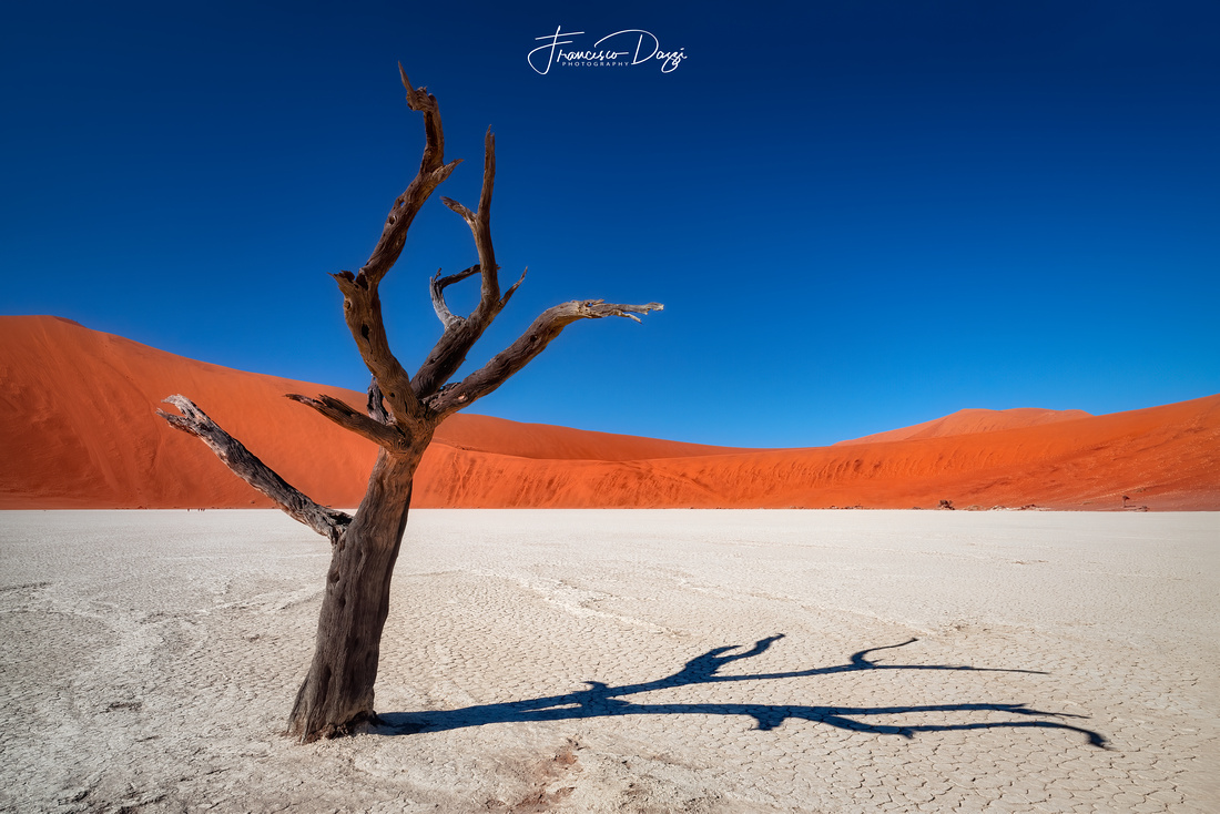 Dead acacia tree in Sossusvlei Pan namibia africa landscape