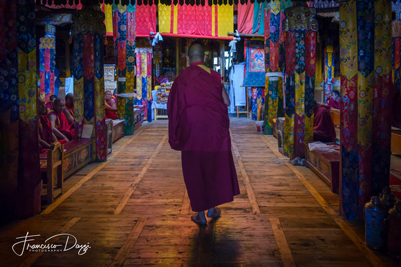 Morning Puja at Samstanling Gompa Ladakh monastery monks