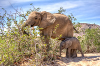 Female african desert elephant with juvenile in Hoanib river area namibia africa