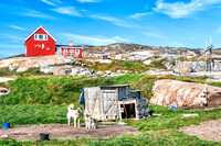 Greenland Dogs resting in Rodebay settlement