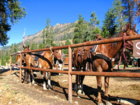 East Yellowstone Valley - Horses in Pahaska Tepee Lodge