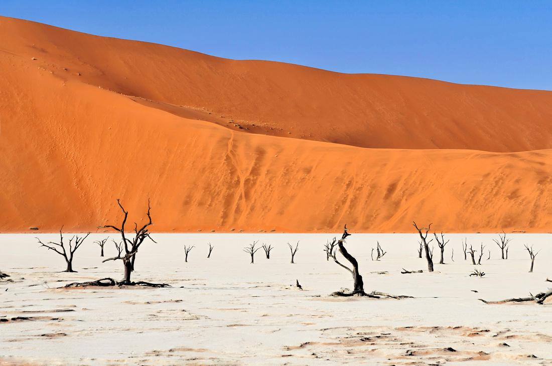 Sossusvlei africa namibia desert arid tree dune landscape