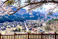 Shirakawa-go village in spring Japan sakura cherry blossom landscape